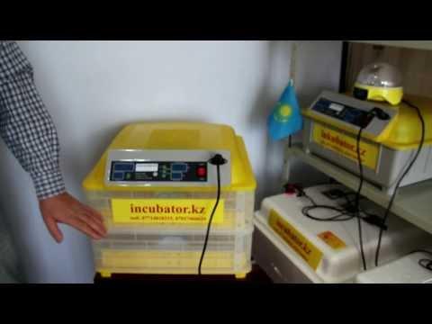 Автоматический инкубатор бытовой Комфорт
