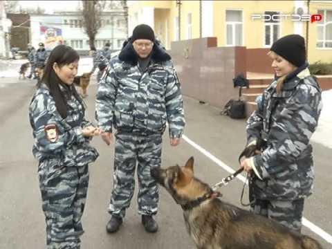 Где в Ростове стать кинологом?