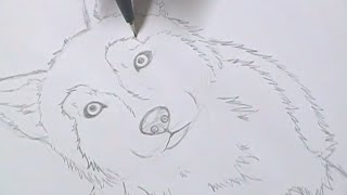Tutorial - Como desenhar cachorros / How to draw dogs