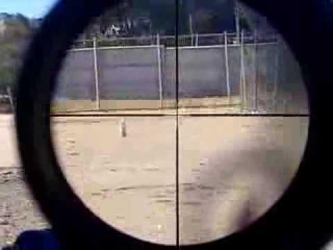 el mejor tiro con rifle de aire comprimido