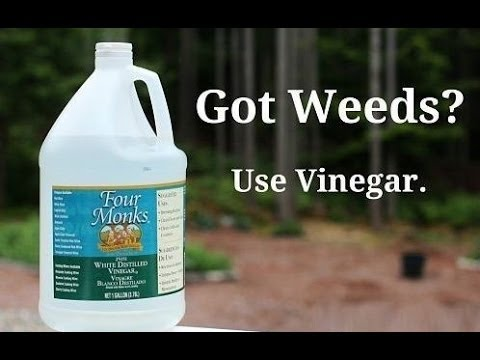how to kill crabgrass organically