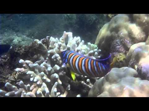 Dauin reserve marine