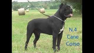I 10 migliori Cani da Guardia