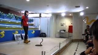 沖縄 解説付実演 コブラを操る おきなわワールド Cobra Demo Okinawa World