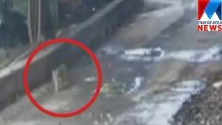 Camera trap near Sabarimala gets tiger footage   Manorama News