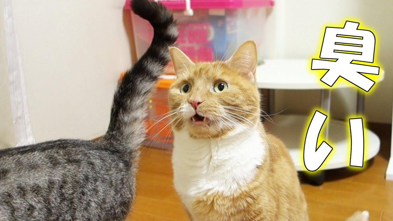 猫の画像 p1_18