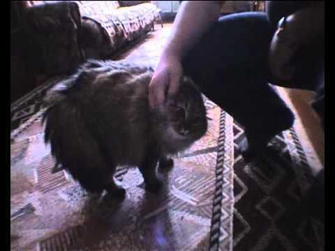 Videonota: Nou nou nou... un gato con principios