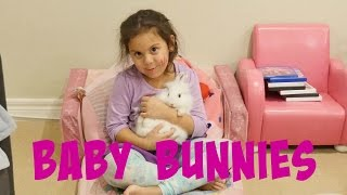 Super Cute Bunnies - Baby bunnies
