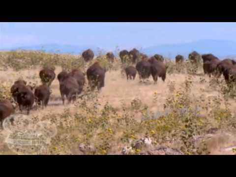 Buffalo Dreams - Ending