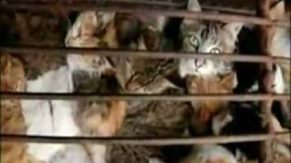 Do you know ? Chinese Eat Cats they love Cat Meat