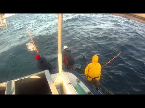 Commercial Tuna Lift Pole Fishing Sept 16,2011