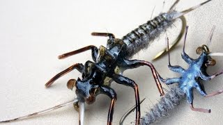 Realistic stonefly nymph for fly fishing plecoptera fly tying instructions