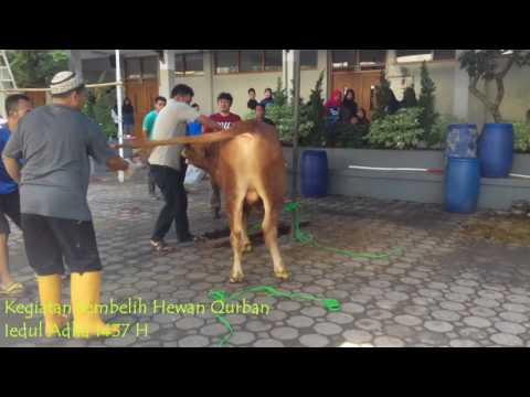 Kegiatan Sembelih Hewan Qurban Iedul Adha 1437 H SMP PGII 2 Kota Bandung