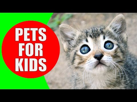 Pets for Children - Pet animal sounds for kids to learn - Exotic Pets & Small Pets | Kiddopedia