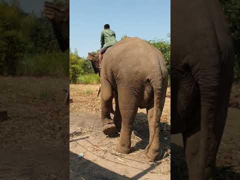 Thailand elefant