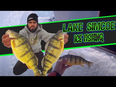 Ice Fishing Lake Simcoe - JUMBO PERCH
