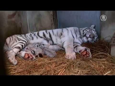 Зоопарк, Майк Науменко - Свет