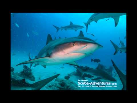 Bahamas Shark Expedition 2/12-19/15
