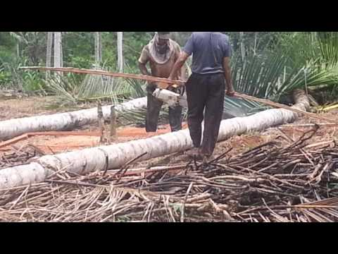 how to make coconut lumber in Indonesia