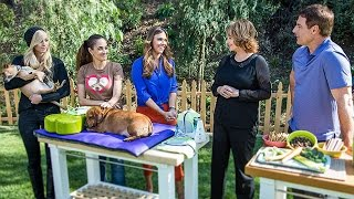 Home & Family - Tips on Fighting Pet Obesity