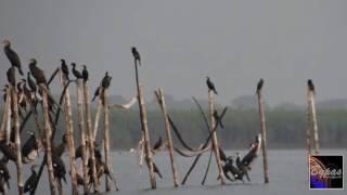 পাখি দেখার এইতো সময় (টাঙ্গুয়ার হাওর)