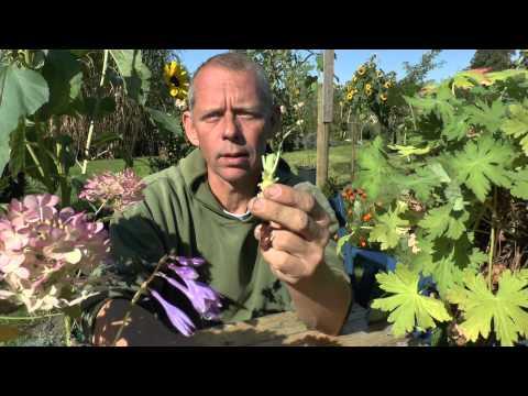 pflanzen vermehrung teil 1 stecklinge vom storchschnabel geranium g rtnertipp youtube. Black Bedroom Furniture Sets. Home Design Ideas
