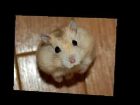 fuzzy fuzzy cute cute