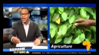 Cameroun, le pays du poivre blanc
