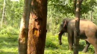 kerala_wayanad_forest  Elephant road crossing