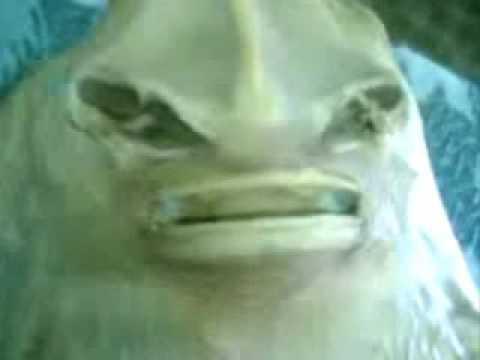 pesce alieno