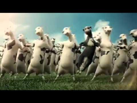 Quảng Cáo Vinamilk - Những Con Bò