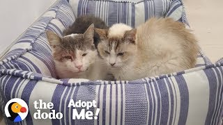 Bonded Shelter Cats Are Looking For A Home Together  | The Dodo Adopt Me!