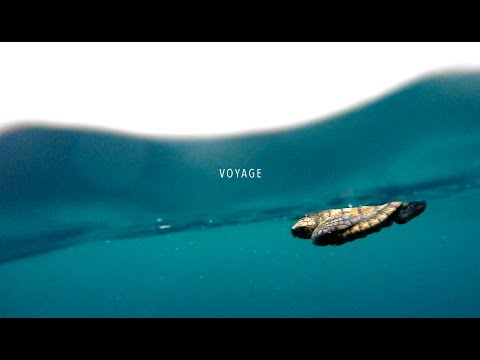 VOYAGE // A turtle story with Chris Bertish and the Two Oceans Aquarium