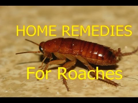 Home Remedies For Roaches In House Outside Roaches Control