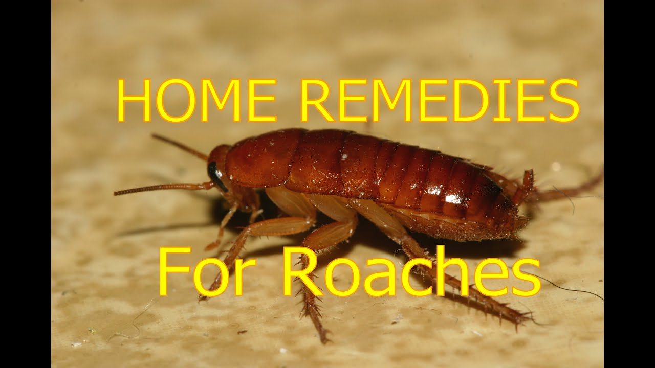 How Do Roaches Get In Your Home