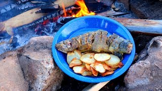 Catching & Cooking Wild Trout Fish n' Chips Over a Fire!