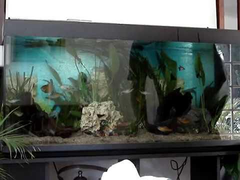 d coration plantation aquarium d 39 eau douce youtube. Black Bedroom Furniture Sets. Home Design Ideas