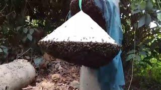 """Thử thách bắt tổ ong khủng và điều kỳ diệu xuất hiện """"săn bắt đồng nai """""""