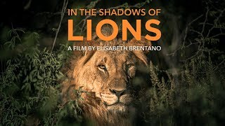 In The Shadows Of Lions