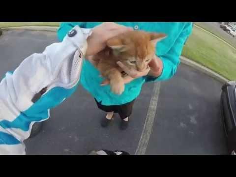 衝撃的すぎる子猫との運命の出会い♪道路で轢かれそうなところを助ける素敵な女性。