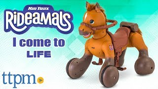 Rideamals Scout Play & Ride Pony - Interactive Toys from KidTrax