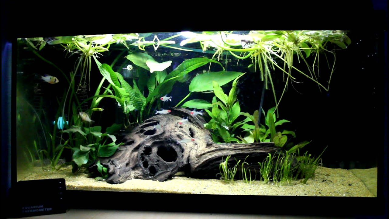 Updated 60 liter amazon style aquarium youtube for Decoration aquarium 60 litres