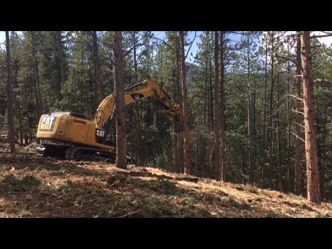 Forest thinning treatments in Colorado burn areas