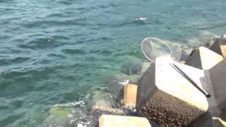 木津港へ強風の中 ショアジギンク