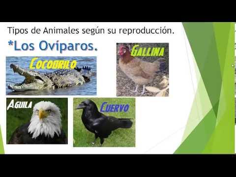 Los tipos de Animales por su Alimentacion y por su Reproduccion