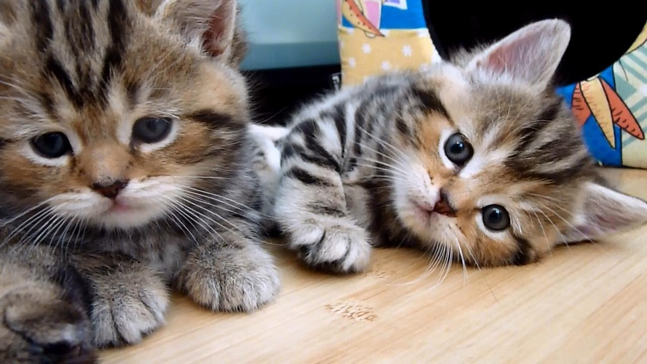 Cute Kittens tear down their home| Funny Cats - YouTube