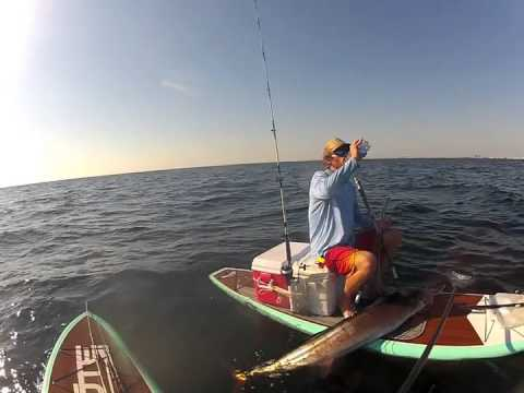 Sailfish Caught On Stand Up Paddle Board Youtube