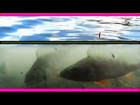 фидер под водой видео
