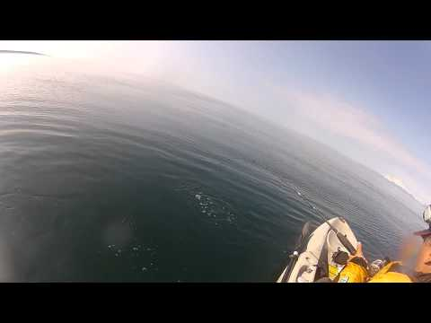 Halibut Fishing from a Kayak 8/12/12