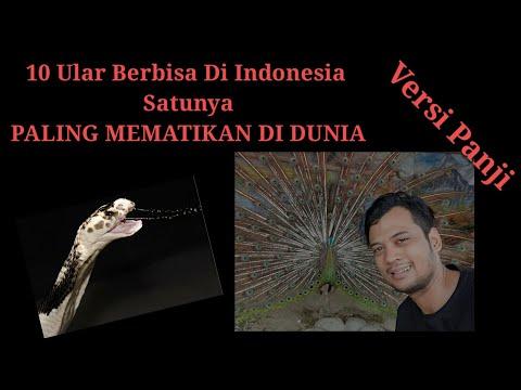 10 ULAR BERBISA DI INDONESIA, NO 1 PALING BERBISA DI DUNIA!
